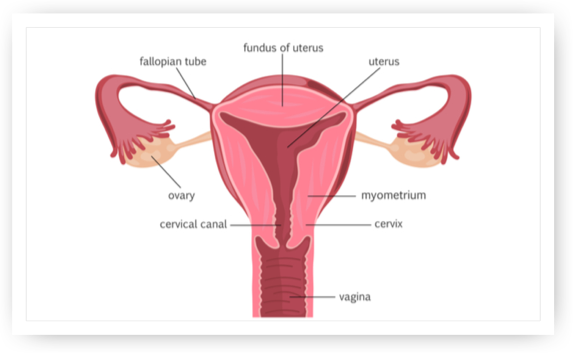 Cervical Cancer - West Cancer Center